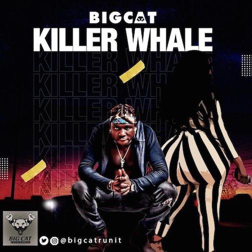 Bigcat - Killer Whale